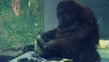 zoo relacja